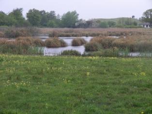 Gulstav Mose med hvas avneknippe og tagrør.I forgrunden kalkrigt overdrev med fladkravet kodriver. Opvækst af tjørn truer vegetationen, som bl.a. tæller majgøgeurt og skovgøgelilje.