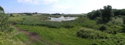Vue over Gulstav Mose fra fugletårnet, sommeren 2012.