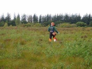 Rydning af birk, september 2012
